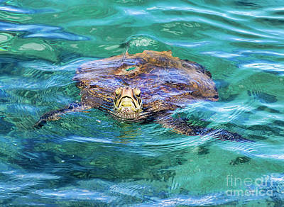 Photograph - Maui Sea Turtle by Eddie Yerkish
