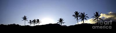 Maui Sunset Palm Tree Silhouettes Art Print by Denis Dore