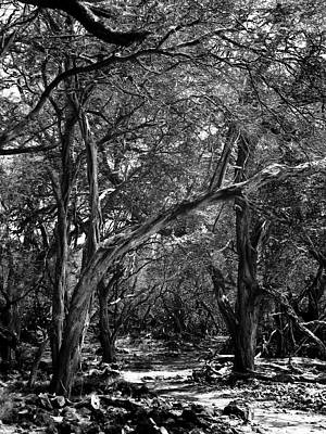 Photograph - Maui Trees by Art Shimamura