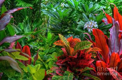 Plumeria Flowers Photograph - Maui Tropics by Kelly Wade