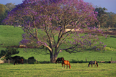 Photograph - Maui, Upcountry by Ron Dahlquist - Printscapes
