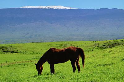 Photograph - Mauna Kea Countryside by Pamela Walton