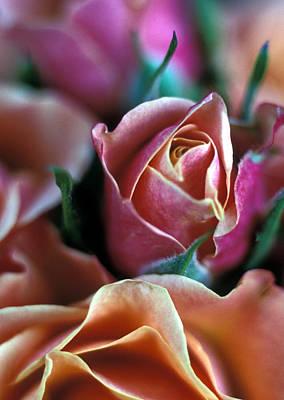 Mauve And Peach Roses Art Print by Kathy Yates