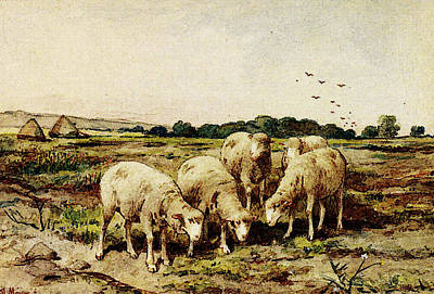 Anton Digital Art - Mauve Anton Grazing Sheep by Anton Mauve