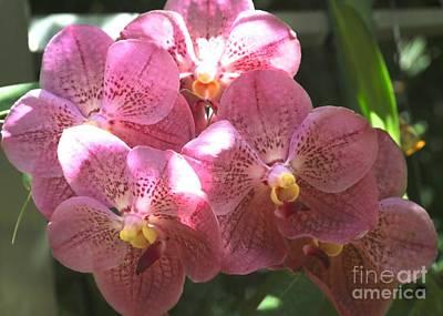 Photograph - Mauve Orchids by Carol Groenen
