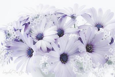 Photograph - Mauve Osteospernum Flowers by Sandra Foster