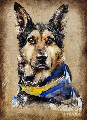 Drawing - Max The Military Dog by Daliana Pacuraru
