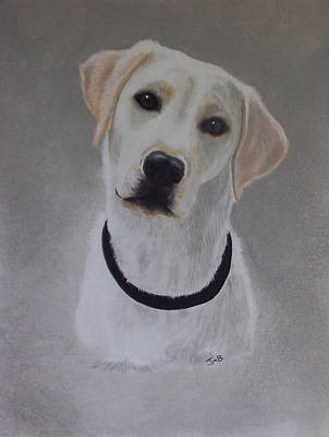 Maxie Art Print by Janice M Booth