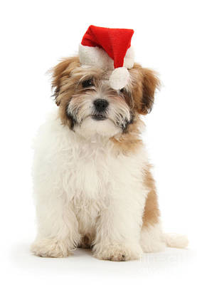 Photograph - May I Help You This Christmas by Warren Photographic