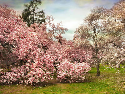 Photograph - May Magnolia by Jessica Jenney