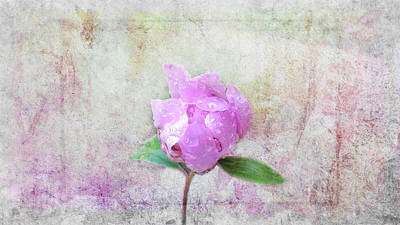 Photograph - May There Always Be Roses by Marilyn Wilson