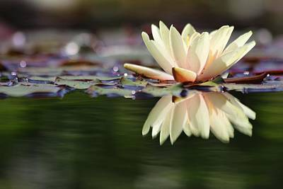 Photograph - May Water Lily  by Carol Montoya