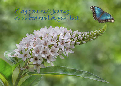 Gooseneck Loosestrife Photograph - May Your Next Journey Be As Beautiful As Your Last... by Patti Deters