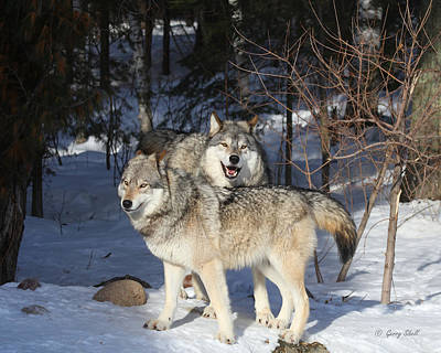 Photograph - Maya And Grizzer by Gerry Sibell