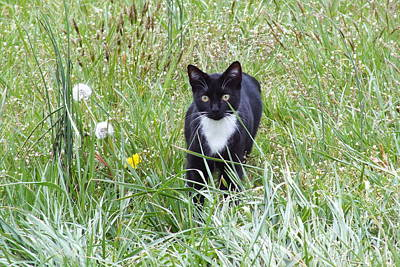 Photograph - Maya The Cat In The Grass by Duane McCullough