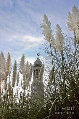 Photograph - Mayflower Memorial Through The Pampas Grass by Terri Waters