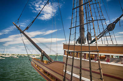 Photograph - Mayflower by Mick Burkey