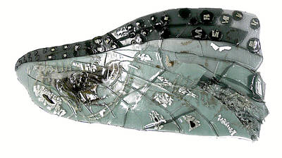 Mayfly Wing  Art Print by Sarah King