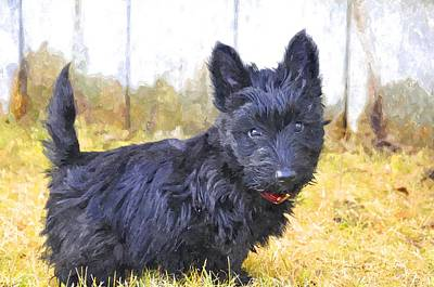 Scottish Terrier Digital Art - MBF by Image Takers Photography LLC - Laura Morgan