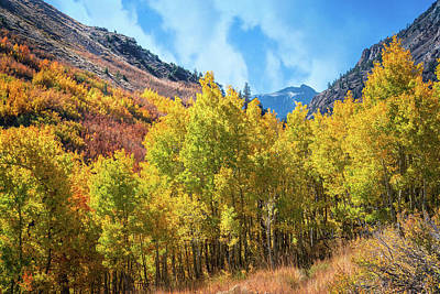 Photograph - Mcgee Creek Aspens by Lynn Bauer