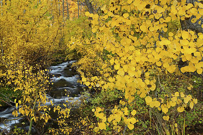 Photograph - Mcgee Creek Fall Color by Nolan Nitschke