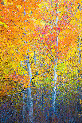 Photograph - Mcgee Creek Fiery Aspens by Alexander Kunz
