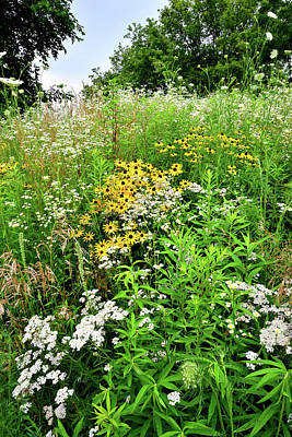 Photograph - Mchenry County Conservation District Wildflowers by Ray Mathis