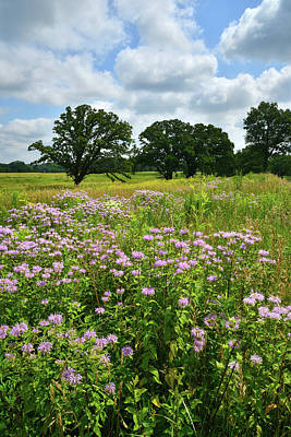 Photograph - Mchenry County Wild Prairie by Ray Mathis
