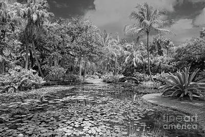Photograph - Mckee Gardens Ir B And W by Larry Nieland