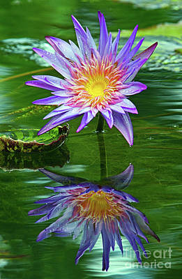 Photograph - Mckee Water Lily by Larry Nieland