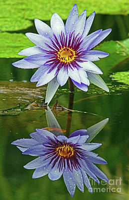 Photograph - Mckee Waterlily II by Larry Nieland