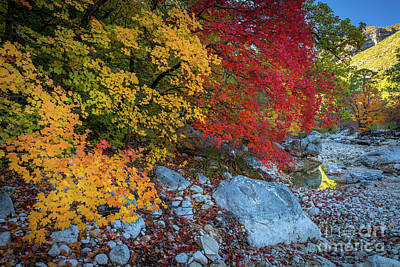 Fall Foliage Photograph - Mckittrick Autumn by Inge Johnsson