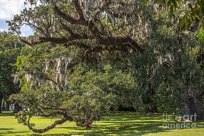 Photograph - Mcleod Live Oak by Dale Powell