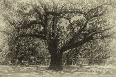Photograph - Mcleod Plantation Majestic Oak by Dale Powell