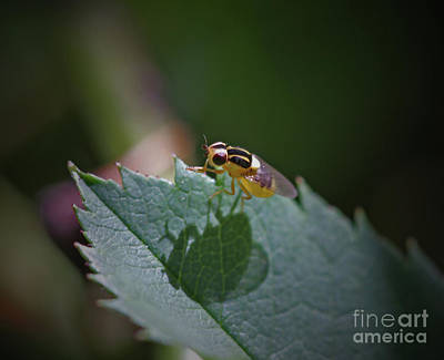 Bugs Photograph - Me And My Shadow by Gary Wing