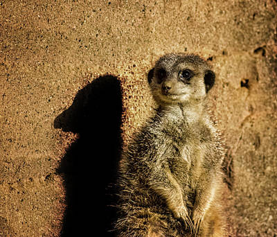 Meerkat Wall Art - Photograph - Me And My Shadow by Martin Newman