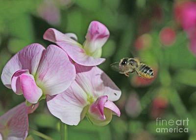 Pink Photograph - Me And My Sweet Pea by Gary Wing