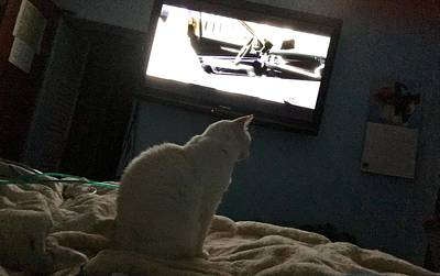 Photograph - Mr Cat Watches Tv by Lenore Senior