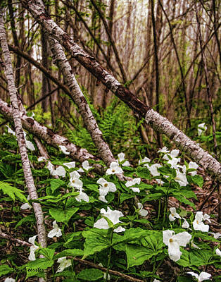 Photograph - Mead Trillium 1 by Trey Foerster