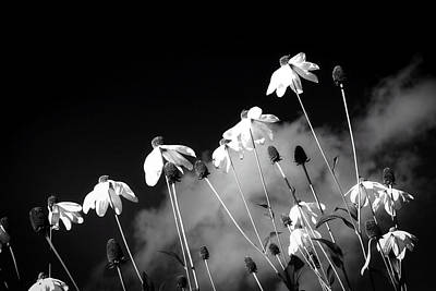 Photograph - Meadow Beauty - Black And White by Glady