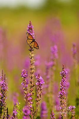 Photograph - Meadow Colours by Joshua McCullough