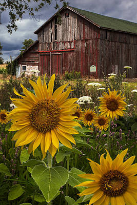 Photograph - Meadow Flowers At The Barn by Debra and Dave Vanderlaan