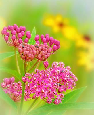 Photograph - Meadow Flowers by Carolyn Derstine