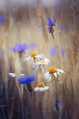Wheat Photograph - Meadow Flowers by Magda Bognar