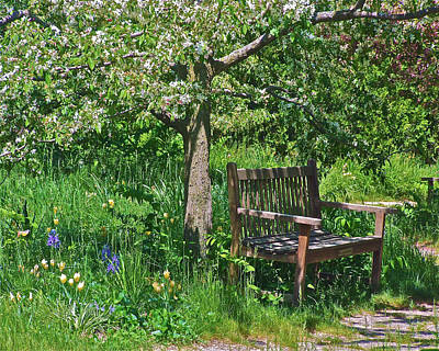 Photograph - Meadow Garden Bench  by Janis Nussbaum Senungetuk