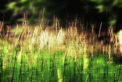 Photograph - Meadow Grass by John Meader