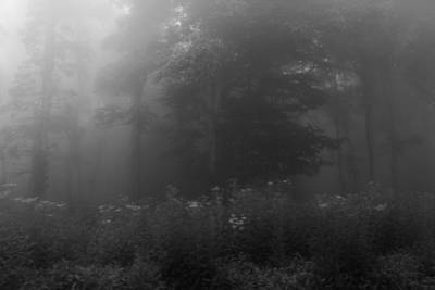 Photograph - Meadow In The Fog In Black And White by Kelly Hazel
