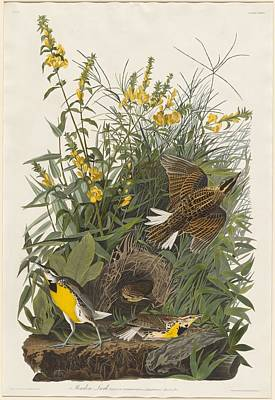 Meadow Lark Art Print by Rob Dreyer