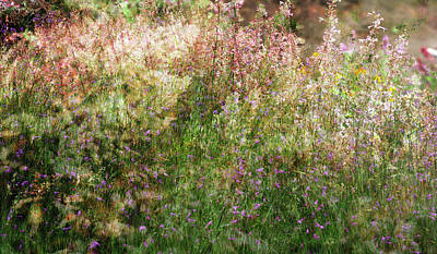 Photograph - Meadow by Linde Townsend