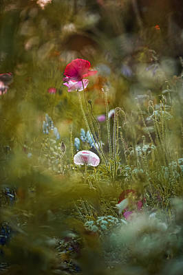 Photograph - Meadow Magic by Sarah-fiona  Helme